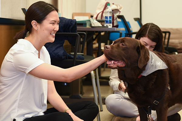 HMS students and staff spend time de-stressing with a chocolate Lab named Jeter.