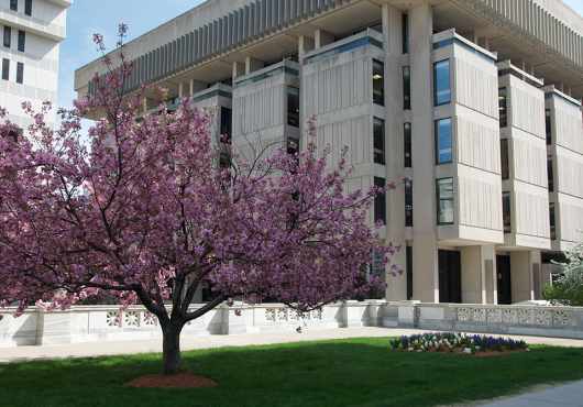 Countway Library building with a purple tree blossoming in front