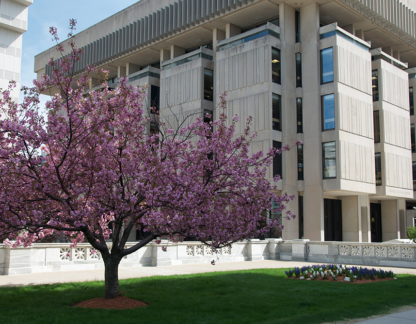 Countway Library with Purple Flowering Tree